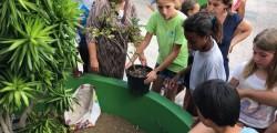 plantons 100 arbres pour notre planète